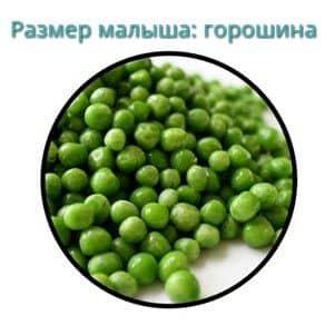 Размер плода на 6 неделе